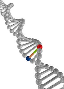 DNA testing Gold Coast
